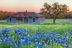 Building Bluebonnets (Evan Gearing (Evan's Expo)) Tags: flowers sunset building spring nikon rust texas rusty rr stonewall wildflowers hillcountry 1320 hdr bluebonnets johnsoncity springtime photomatix ranchroad d300s evangearingphotography evansexpo