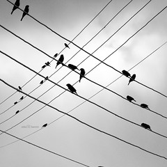 M a r t y r s .. (mhd.hamwi) Tags: sky up lines birds silhouette clouds dark nikon dancer cables wires syria martyrs departure damascus sham intersections dancerinthedark nikond5000 mhdhamwi