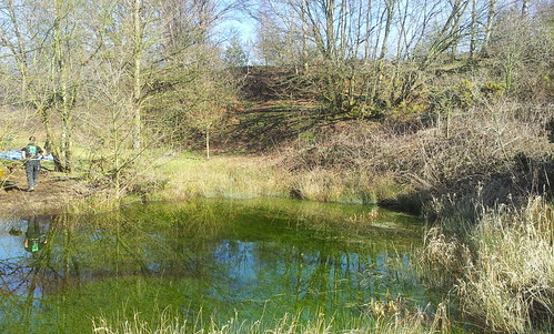 Landscape Gardening  Alderley Edge Image 19