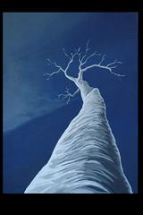 albero bianco