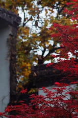 Red Maple () Tags: 9028 teleelmaritm nex5n
