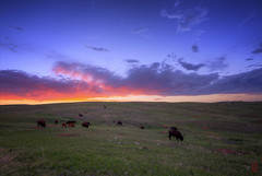 Supper (@!ex) Tags: sunset southdakota blackhills buffalo bison hdr windcavenationalpark borderfxef14mmf28liiusmcanon5dmkiii americanbufalo bracketaeb