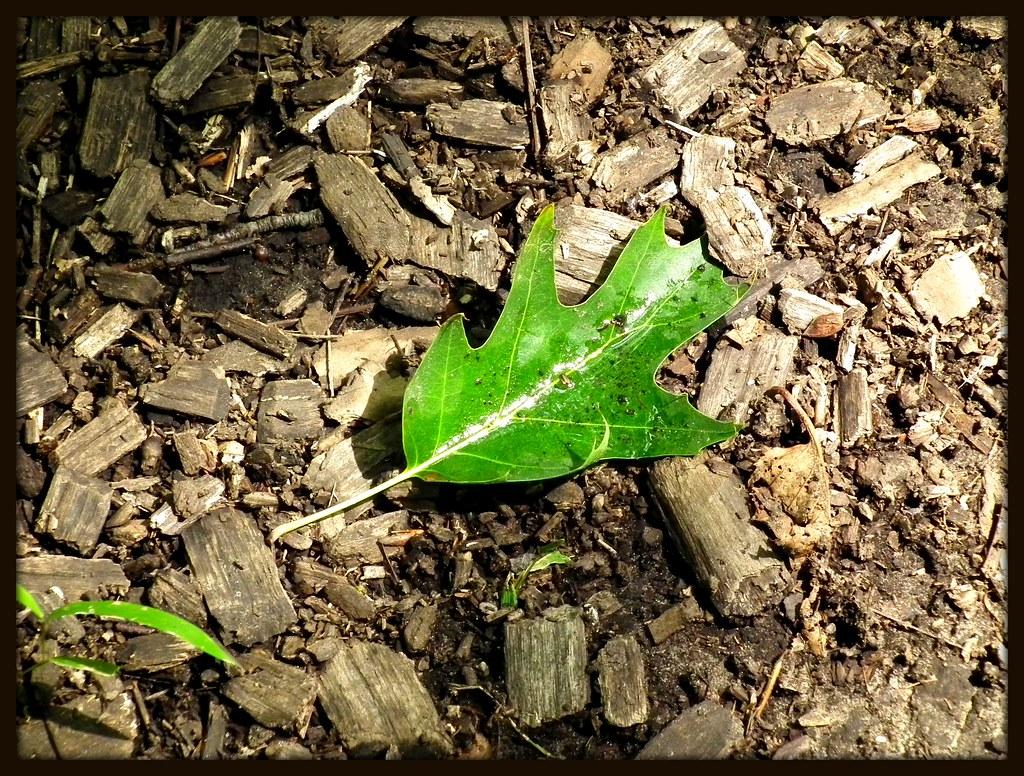 Leaf Basom, NY