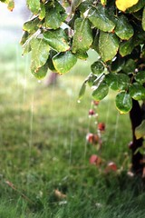 I miss the Rain! (redaleka) Tags: trees light summer tree green fall nature water colors beautiful beauty leaves rain yellow garden lights drops spring focus colorful pretty day branch dof blossom bokeh branches fresh falling foliage rainy moment