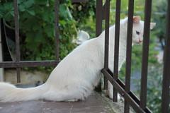 IMG_0394 (deadoll) Tags: cats cute love cat canon fur 50mm furry kat feline chat amor adorable kitty kittens 7d gata felinos felino felines neko katze fofo gatto babys gatti pur 50mmf14 gatas canon50mm canon7d