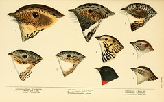 birds northamerica smithsonianinstitutionlibraries bhl:page=12887926 dc:identifier=httpbiodiversitylibraryorgpage12887926