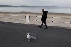 IMG_1907_small_F (Paul Russell99) Tags: beach seaside dusk seagull gull weymouth