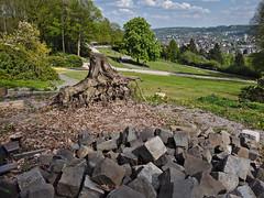 Steinzeit (diarnst) Tags: park green outdoor stones roots bluesky steine grn blauerhimmel wurzeln