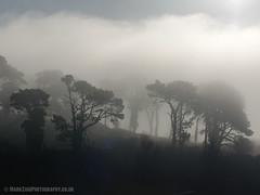 morning Fog 02 (Mark Zaig) Tags: trees mist fog olympus em1 m43 microfourthirds 40140mmf28