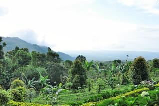 bali nord - indonesie 78
