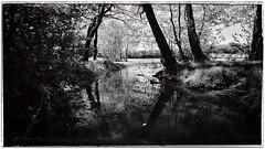 tang de Beauchamp (2) (asterfred71) Tags: blackandwhite bw france landscape nikon noiretblanc lac wideangle tokina reflet uga paysage bourgogne etang rflection grandangle plandeau d7100 1120mm nikond7100