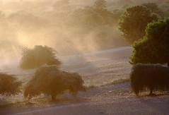 Watercolour (deus77) Tags: trees light sunset sun sunlight mist tree misty fog landscape scenery view burma hill foggy hills watercolour myanmar dust plains burmese bagan plian