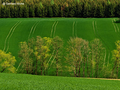 Feldspuren (GerWi) Tags: nature landscape landwirtschaft natur felder spuren wiesen fields landschaft wald acre acker anbau