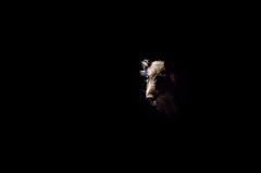 Cinghiale (Bobore Frau) Tags: sardegna monte notte sus cinghiale barbagia nuoro scrofa ortobene boborefrau
