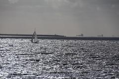 Elbe bei Brokdorf (Elbmaedchen) Tags: sailing elbe segeln segelboot gegenlicht