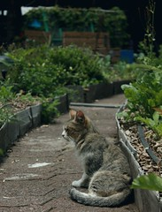Meditación felina. (biadeli) Tags: sun verde green animal cat way nice camino time grove sleep orchard calm sleepy gato meditating animales meditation gatito meditando camin huerto meditación cdmx