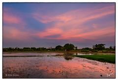 KRP20160418 (msankar4) Tags: nataraja siva tamil nadu konerirajapuram myladuthurai