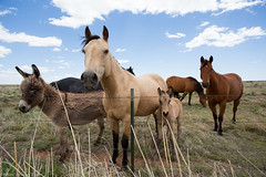 Hevosten ryhmkuva. (PetteriJarvinen) Tags: newmexico us unitedstates elida hevonen