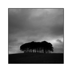 The Copse (ben_wtrs79) Tags: trees bw cornwall olympus 28 omd a30 em1 copse 1240