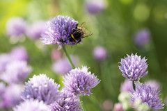 - Busy as a bee - (k.junck) Tags: nikon steps first sigma d750 f28 105mm