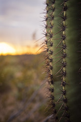 Spiky (Playing_with_light) Tags: park sunset cactus sky usa nature clouds ouch nikon desert tucson national vegetation saguaro needles spikes d800 arizone