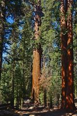 DSC04855 (deerhake.11) Tags: sequoia national park