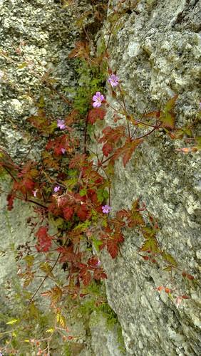 Hollerblütenfest auf der Ruine Prandegg
