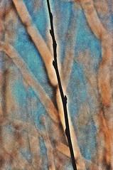 DSC_0944 Invierno (Aprehendiz-Ana La) Tags: blue argentina nikon rboles flickr hiver bosque cielo invierno inverno fotografa ramas desnudas analialarroude