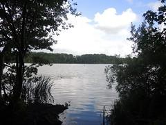 Am Kleinen See, Lbeck , NGID1936361162 (naturgucker.de) Tags: lbeck kleinersee naturguckerde cwolfgangkatz ngid1936361162