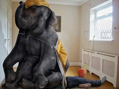 Sometimes when Fred was flat out doing housework he felt like an elephant was sitting on his chest. (David Blackwell.) Tags: elephant bucket sitting room chest brush housework fred weight broom