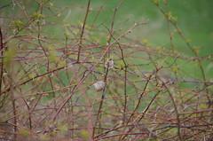 DSC_0034 (rlg) Tags: march saturday 31 2012 fpr 0331 201203 nikonp5100 20120331 03312012