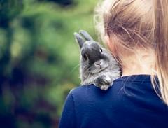 13   52 (angiel) Tags: rabbit bunny easter sweet guido 2012 week13 angiel hbw netherlanddwarfrabbit 52weekproject 522012 52weeksthe2012edition weekofmarch25