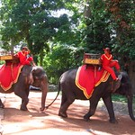 "Elephants <a style=""margin-left:10px; font-size:0.8em;"" href=""http://www.flickr.com/photos/14315427@N00/6966999806/"" target=""_blank"">@flickr</a>"