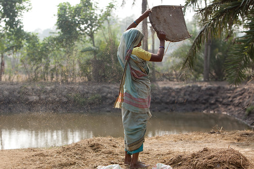Husking rice, Khulna, Bangladesh. Photo by Mike Lusmore/Duckrabbit, 2012.