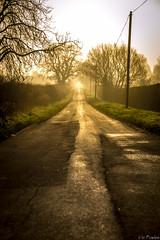 Morning Rat Run (Vic Powles) Tags: morning trees mist sunrise flickr