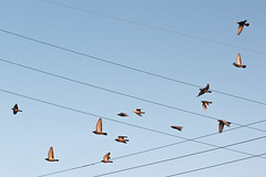 (EYECCD) Tags: sun color flying pigeons wires cheers chuck lit flickrstock cheers2 550d chuck2 chuck3 chuck4 cheers3 chuck6 chuck9 chuckedoutbythepigsty chuck5 chuck7 chuck8 chuck10