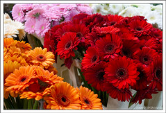 Bouquets (Frdric GROSSO) Tags: fleurs rungis