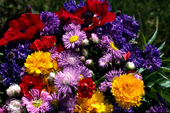 Flowers (yvon Merlier) Tags: flowers sea love nature landscape spain soe platinumphoto