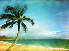 IT'S A GOOD IDEA..... (It's a Keeper) Tags: sky beach water beauty vintage relax relaxing calm shore palmtree tropical serene coastalliving importantdecisions texturemine itsagoodidea 410002