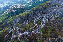 Harry_04639,,,,,,,,,,,,,, (HarryTaiwan) Tags: nationalpark taiwan     sheipa         sheipanationalpark   xueshan  syuemountain               harryhuang xuemountain hgf78354ms35hinetnet
