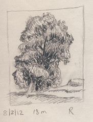 Powell's Cottonwood 201208.02 (Julia L. Kay) Tags: sanfrancisco trees blackandwhite bw woman white plant black tree art female pencil paper landscape grey sketch san francisco artist arte julia kunst kay daily dessin peinture foliage cottonwood 365 everyday dibujo graphite artista artiste knstler juliakay julialkay