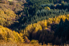 Cwmaman (David_Rees) Tags: autumn trees nature wales nikon stereophonics 18200mm cwmaman aberdare cynonvalley