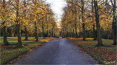 Golden Lane (AshTree25) Tags: autumn fall gardens arboretum autumncolours autumnal westlodgepark