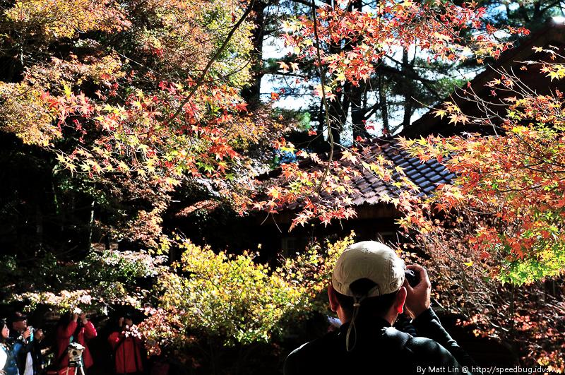 福壽山農場楓紅-43