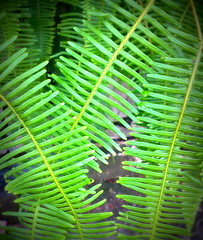 Life patterns... (MahanMD) Tags: life green leaves work leaf malaysia kualalumpur سبز زندگی gogreen سبزی canon400d برگ کوالالامپور سوزنی