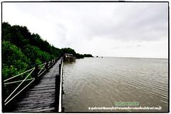 Mangrove forest Chonburi tour by naturenote_E12461014-017