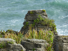 Stacking Pancakes (Steve Taylor (Photography)) Tags: sea newzealand plants nature strange rock stone coast weird rocks waves erosion formation nz strata limestone southisland weathered coastline layers pancake tasman westcoast punakaiki brilliant stacks dolomitepoint putai