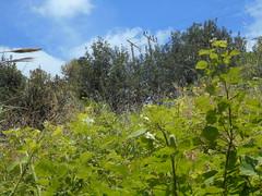Ψίνθος (Psinthos.Net) Tags: sky nature leaves clouds countryside spring may valley greenery noon shrubs brambles φύλλα φύση σύννεφα μεσημέρι άνοιξη bluessky psinthos πρασινάδα εξοχή κοιλάδα ουρανόσ νέφη μάιοσ θάμνοι μάησ γαλάζιοσουρανόσ ψίνθοσ psinthosvalley κοιλάδαψίνθου βάτοι ανοιξιάτικομεσημέρι βάτα μεσημέριάνοιξησ κοιλάδαψίνθοσ