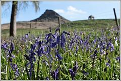 Roseberry DOF. (stu.bloggs..Dont do Sundays) Tags: flowers mountain colour tree bluebells fence landscape spring may foliage wildflowers folly northyorkshire fenceline roseberrytopping