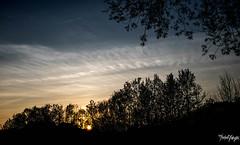 sun is setting (thrbnzzyzx) Tags: sunset sky tree nature clouds sonnenuntergang hamburg natur himmel wolken bahn baum